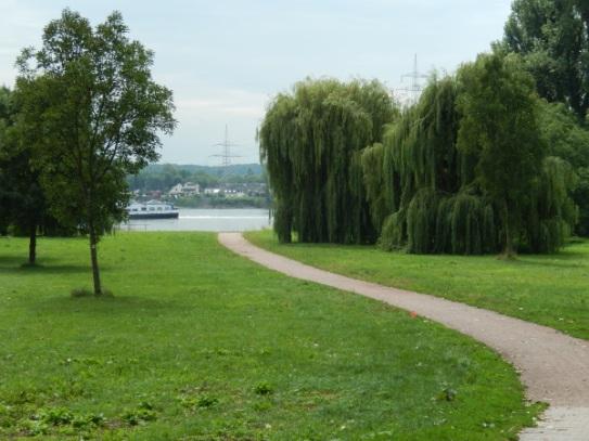 Endlich wieder am Rhein!