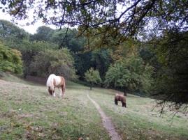 Der Rheinsteig verläuft über eine Pferdekoppel