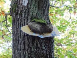 Schilder fressender Baum