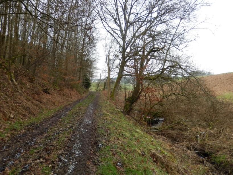 13 Wiesenpfad hinter Racksen