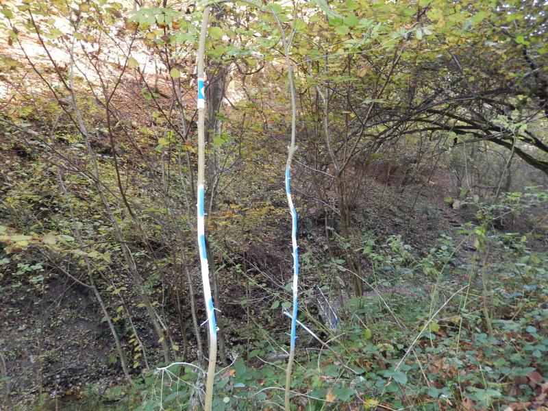 8 jeder Zweig markiert