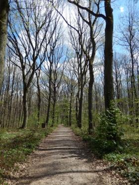 schöner, lichter Wald