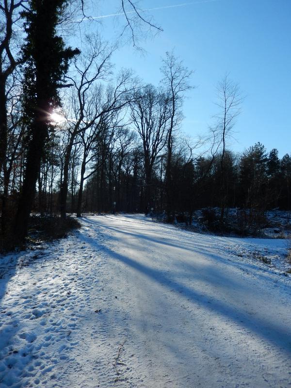 20 im Winterwald 2
