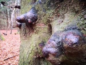 kuriose Baumstruktur