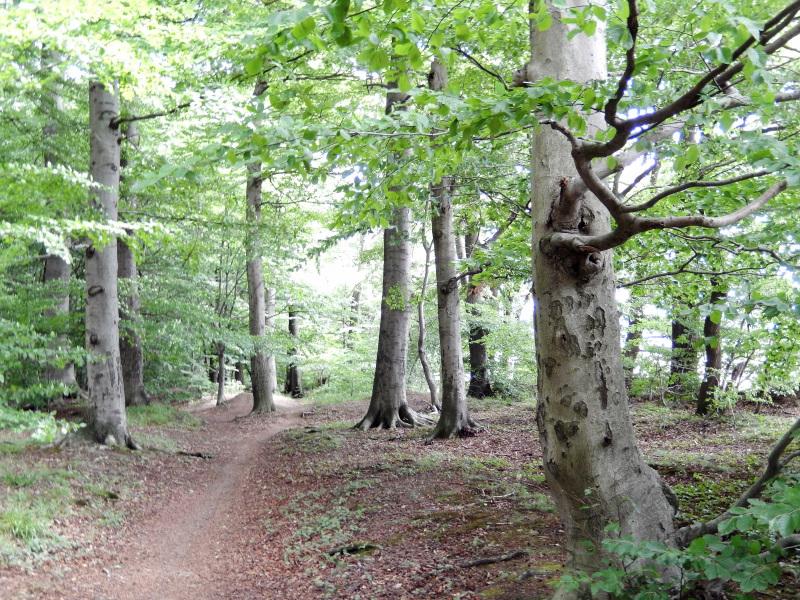 Es gibt nicht nur den Hambacher Forst…