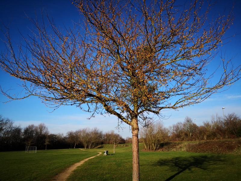 hübscher Baum im Winterkleid