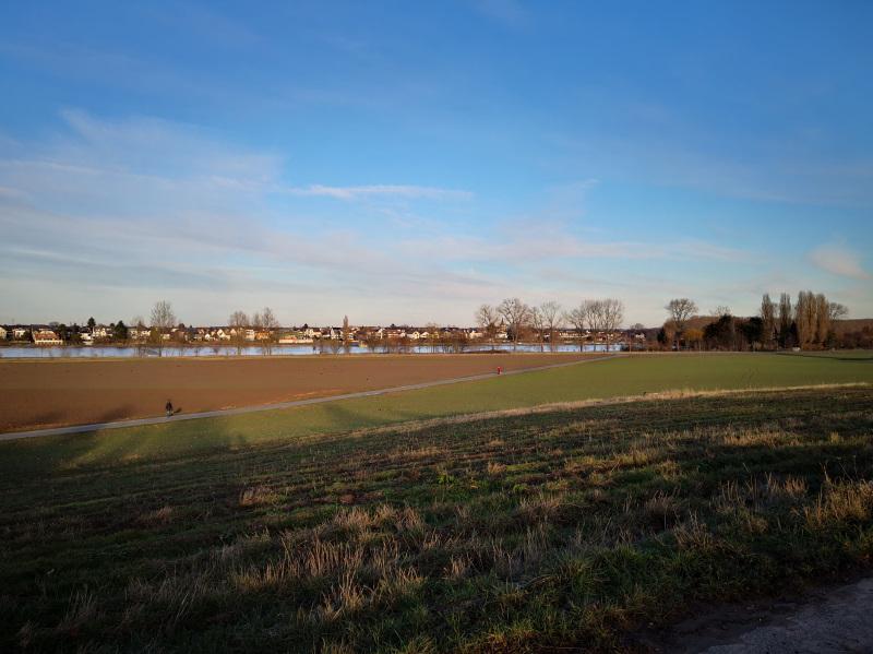 Rheinauen bei Hersel