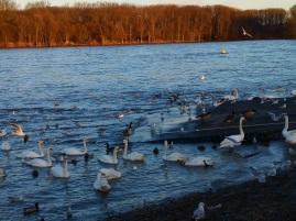 Wasservögel2