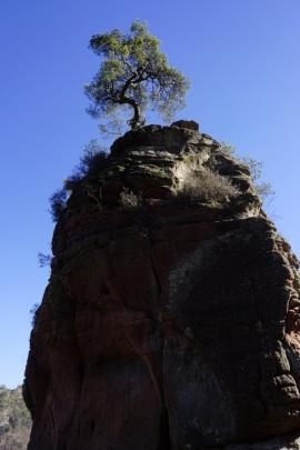 Wie sich der Baum dort oben nur hält?