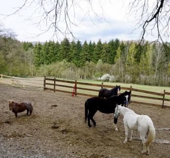 Pferde unterschiedlichster Größe