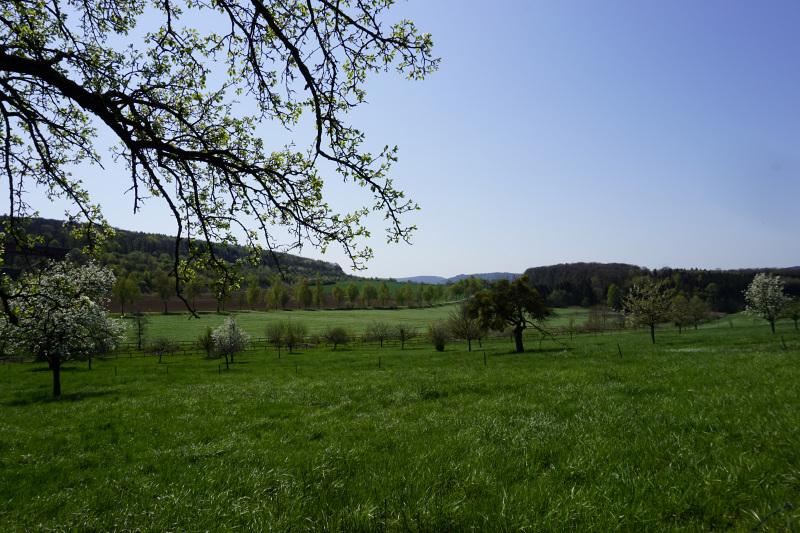 Ich liebe diese parkähnliche Landschaft!