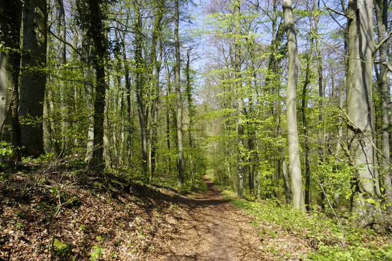 Waldpassage am Rabüscheck