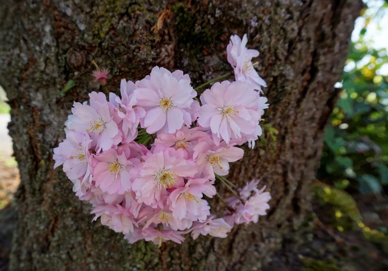 Frühling am Moselsteig