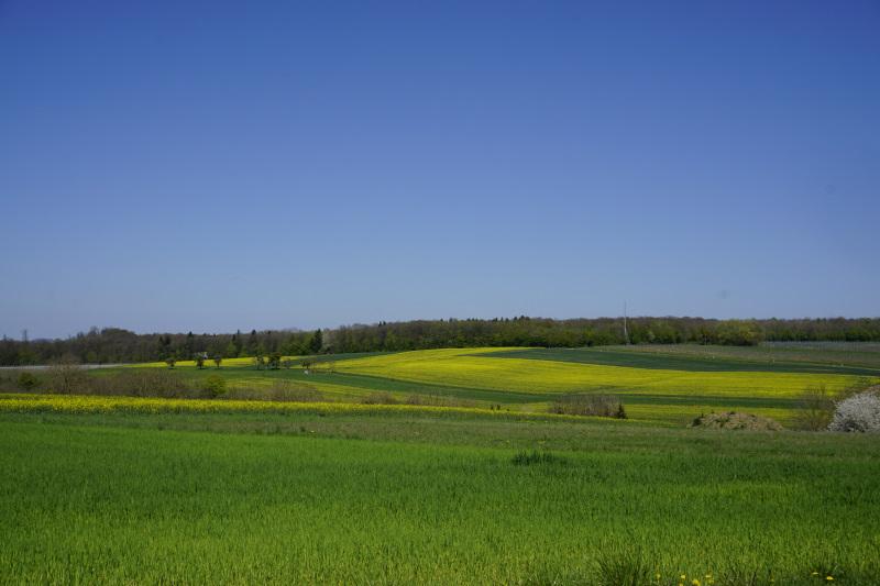 Gelb blühende Wiesen und Felder bei Kreuzweiler