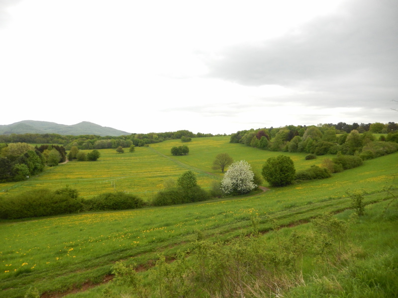 Bonnpfad auf dem Rodderberg
