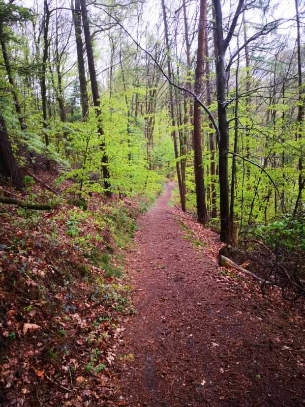 schöner Waldweg auf dem Bergischen Panoramasteig