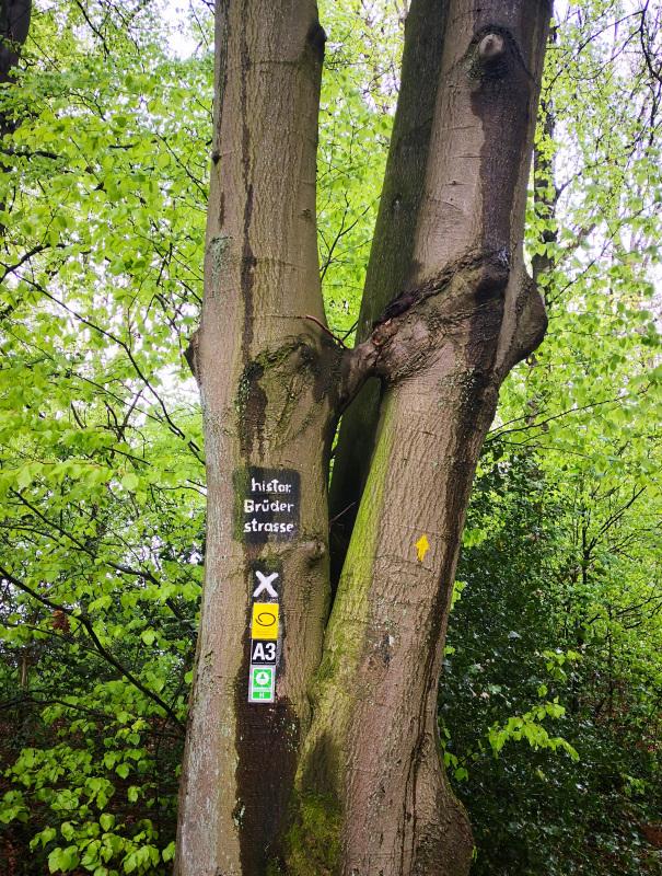 Zwei verbundene Bäume