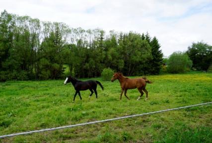 Fröhliche Pferde