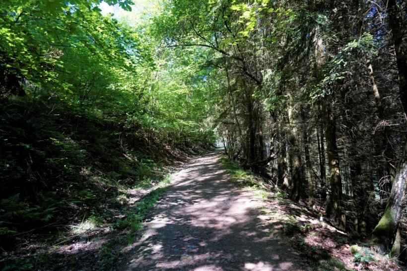Schöne, schattige Waldwege auf dem Eifelsteig