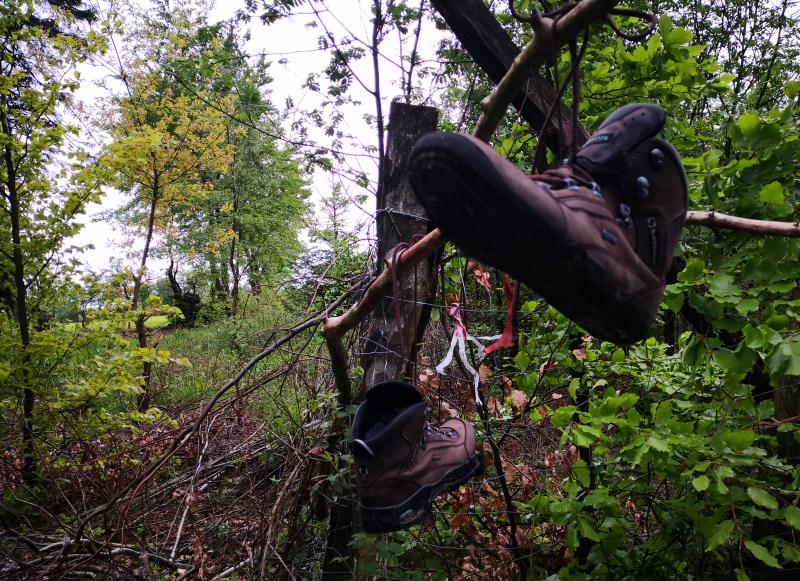 Schuhe im Baum am Eifelsteig